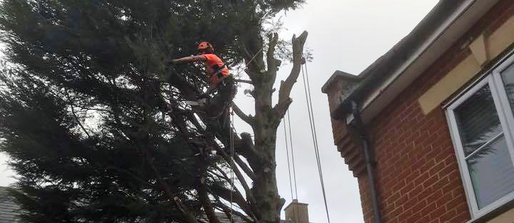 When should I consider Tree Topping?