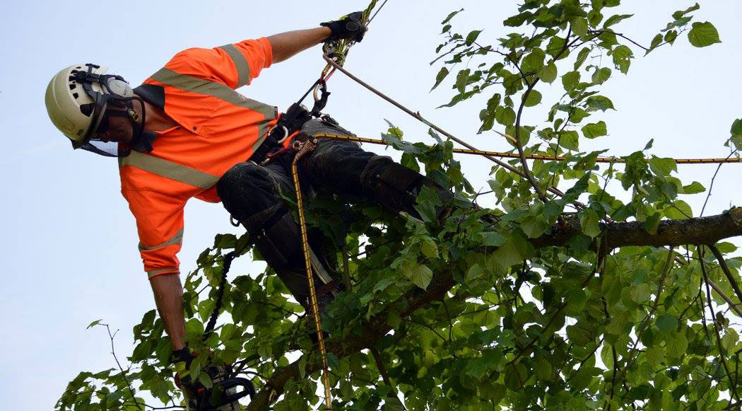 John Fryer tree surgeon
