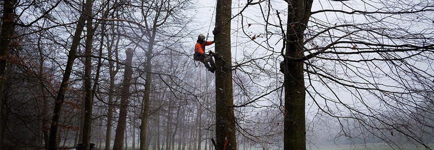Difference in Tree Surgeon and Arborist