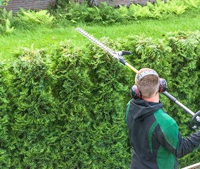 Cypress pruning