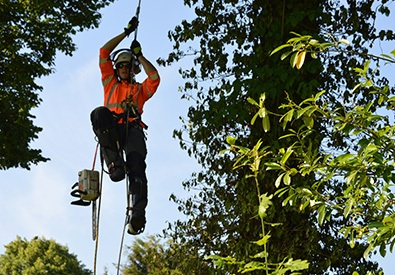 Tree Surgeon John Fryer