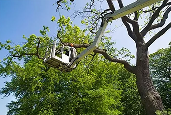 cherry picker tree surgery