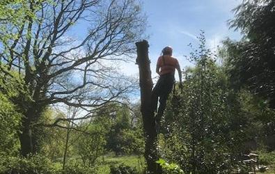 Permit tree surgery